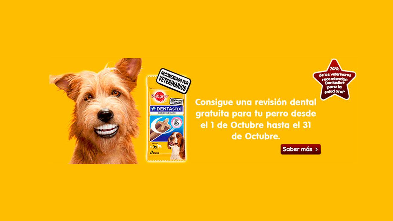 revision dental gratuita perro pedigree